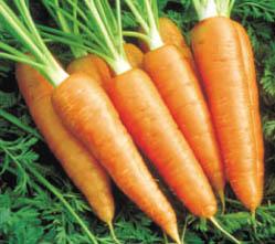 Cómo conservar las zanahorias
