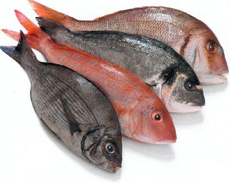 Resultado de imagen de carnicería y pescadería